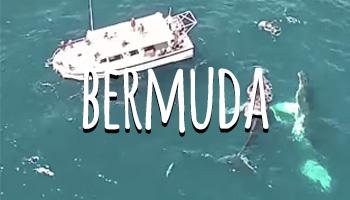 travel by dart Bermuda
